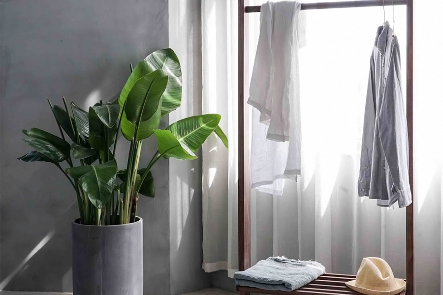 how to choose the perfect house plants for your bedroom and bathroom